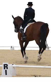 Horse riding inverurie
